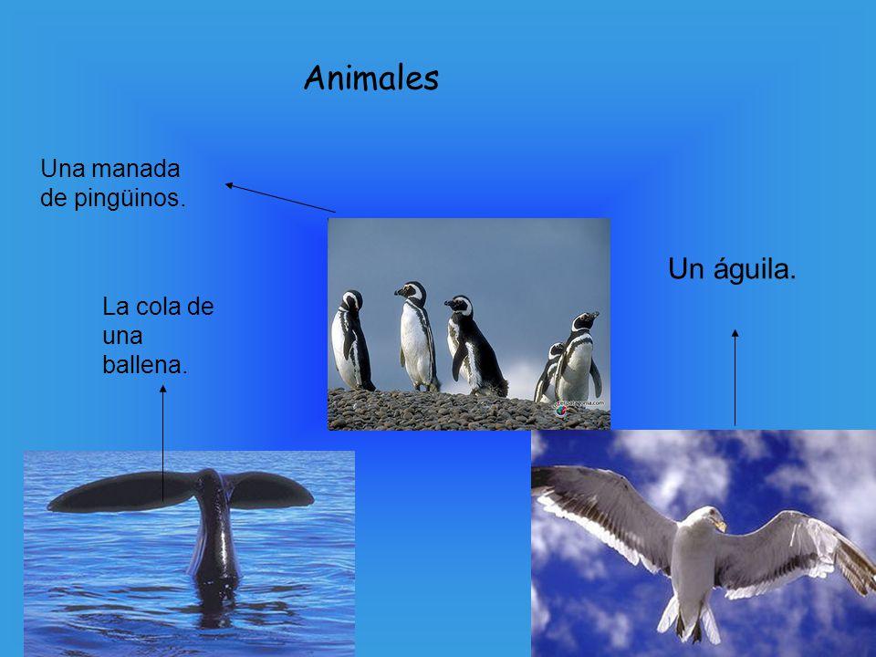 Animales Una manada de pingüinos. Un águila. La cola de una ballena.