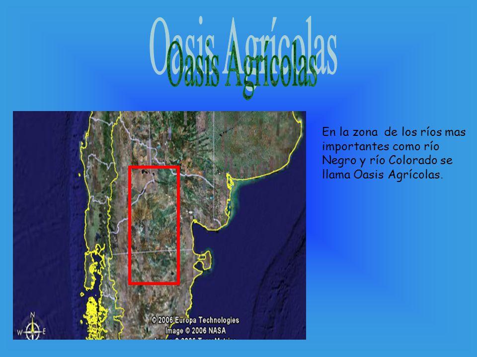 Oasis Agrícolas En la zona de los ríos mas importantes como río Negro y río Colorado se llama Oasis Agrícolas.