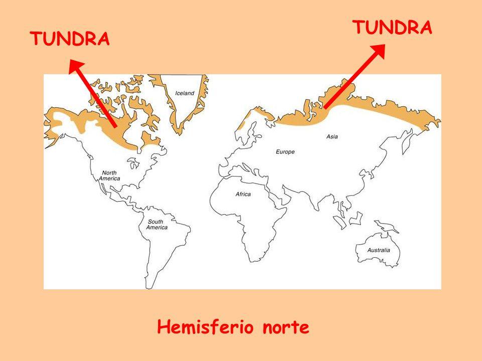 TUNDRA TUNDRA Hemisferio norte