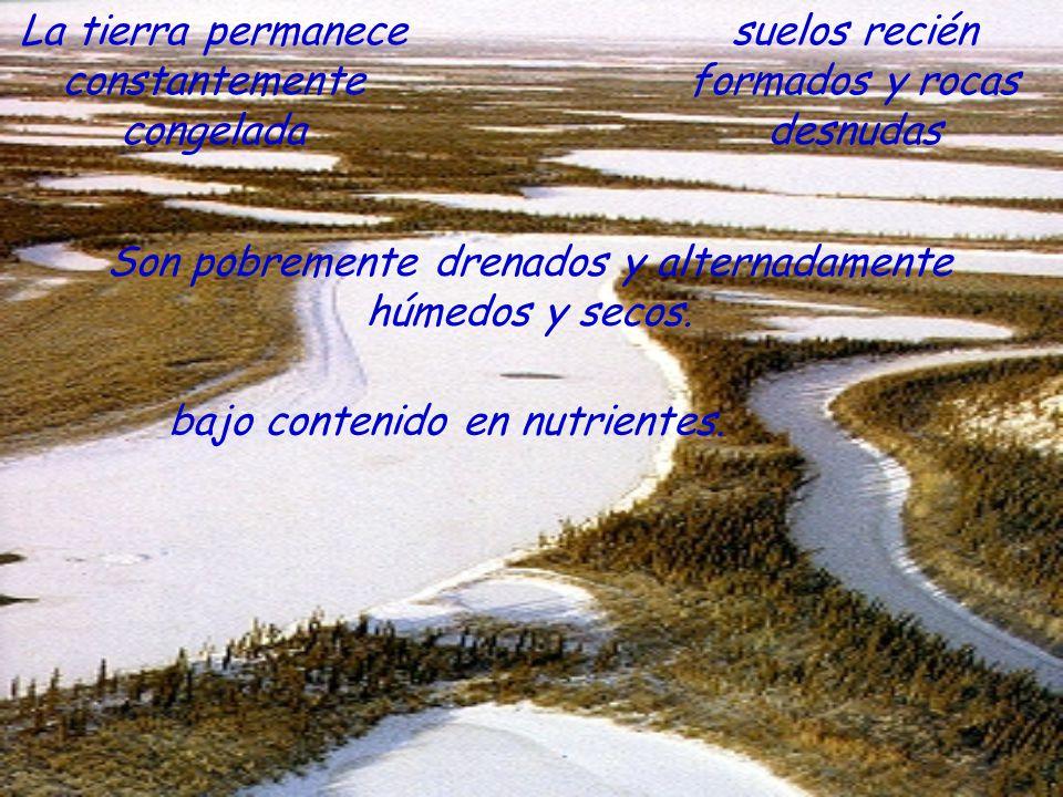 La tierra permanece constantemente congelada