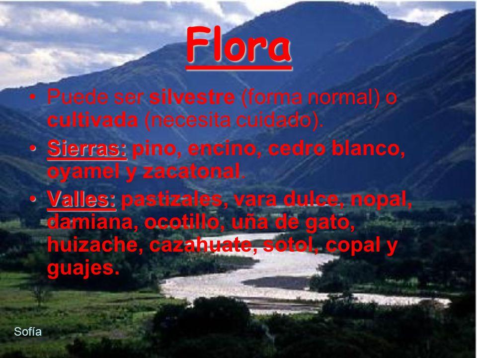 Flora Puede ser silvestre (forma normal) o cultivada (necesita cuidado). Sierras: pino, encino, cedro blanco, oyamel y zacatonal.
