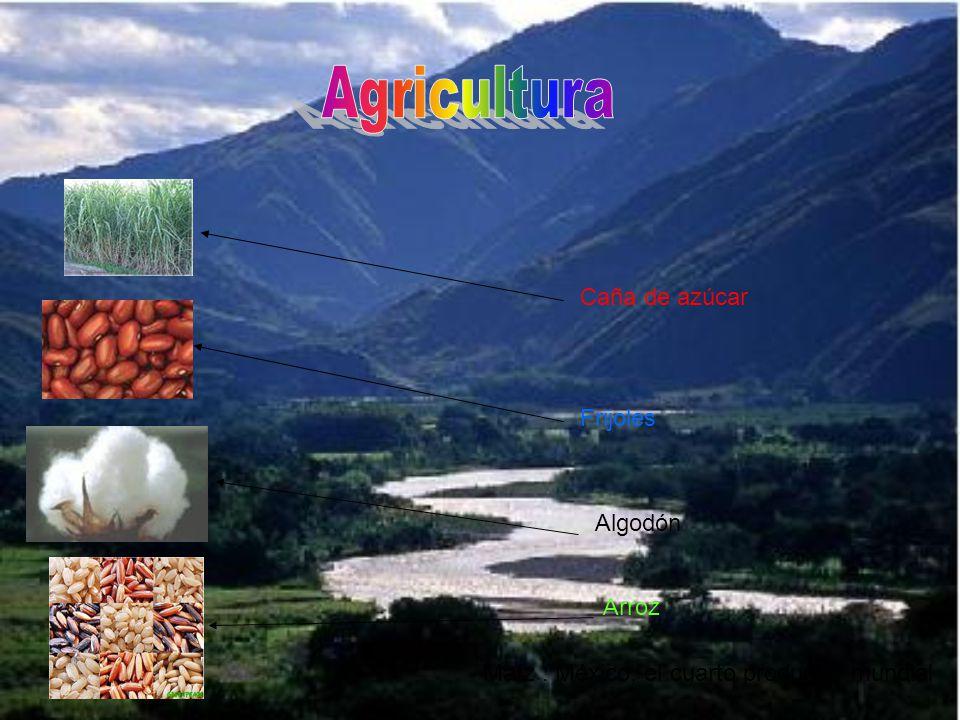 Maíz : México, el cuarto productor mundial