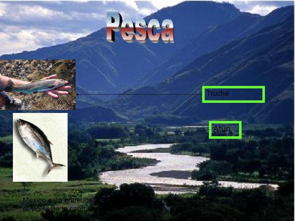 Pesca Trucha. Atún. Mexico esta entre los 20 mejores productores del mundo.