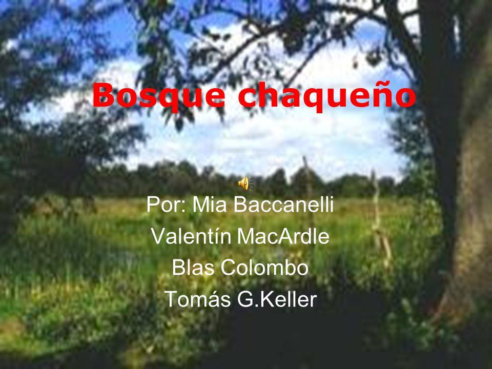 Por: Mia Baccanelli Valentín MacArdle Blas Colombo Tomás G.Keller