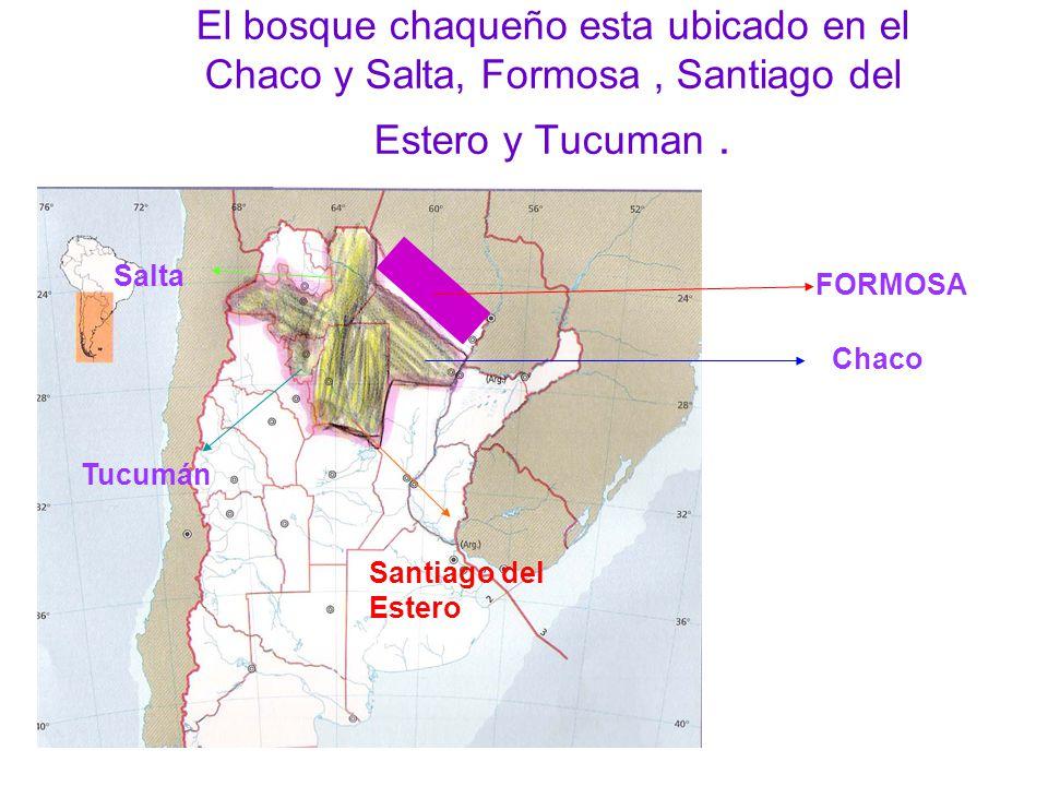 El bosque chaqueño esta ubicado en el Chaco y Salta, Formosa , Santiago del Estero y Tucuman .
