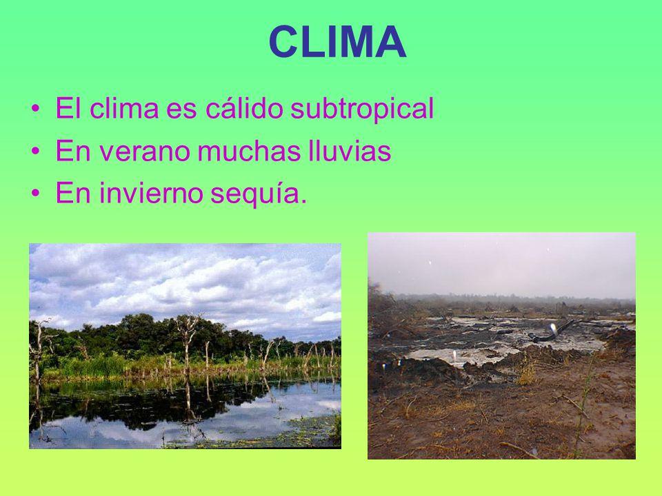 CLIMA El clima es cálido subtropical En verano muchas lluvias