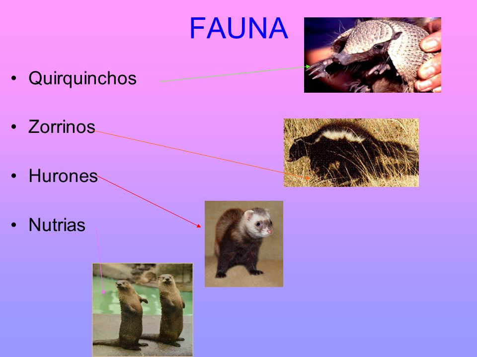 FAUNA Quirquinchos Zorrinos Hurones Nutrias