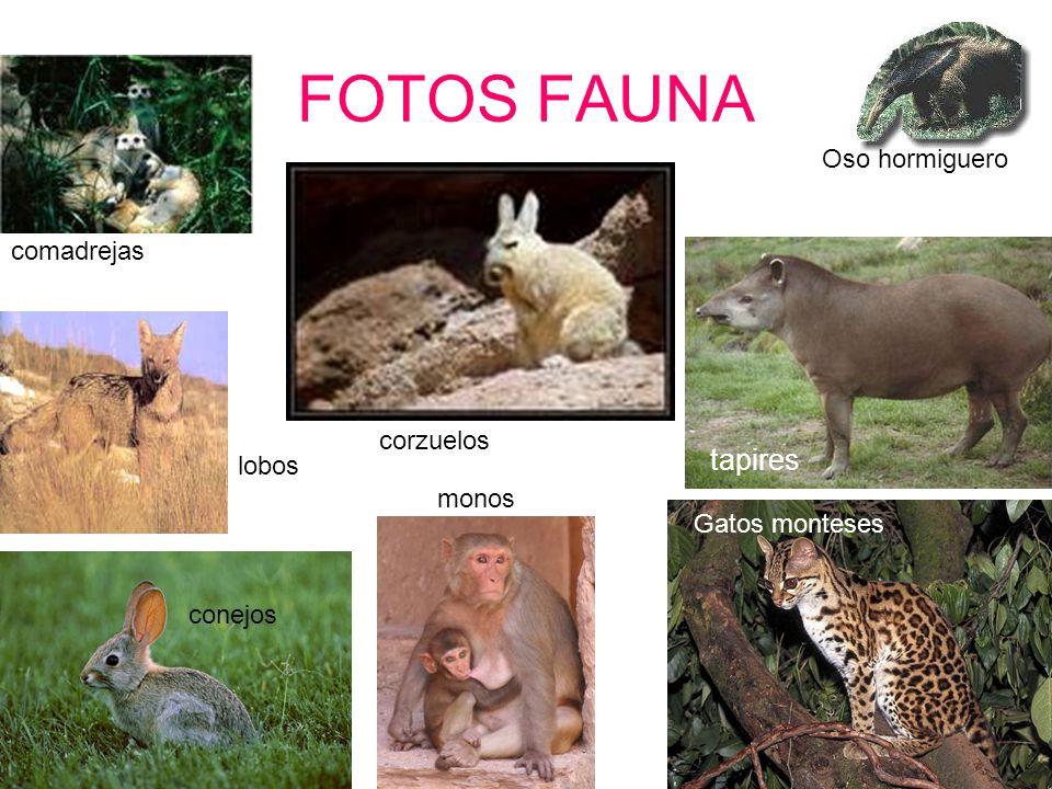 FOTOS FAUNA tapires Oso hormiguero comadrejas corzuelos lobos monos