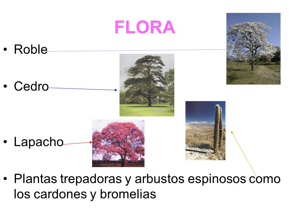 FLORA Roble Cedro Lapacho