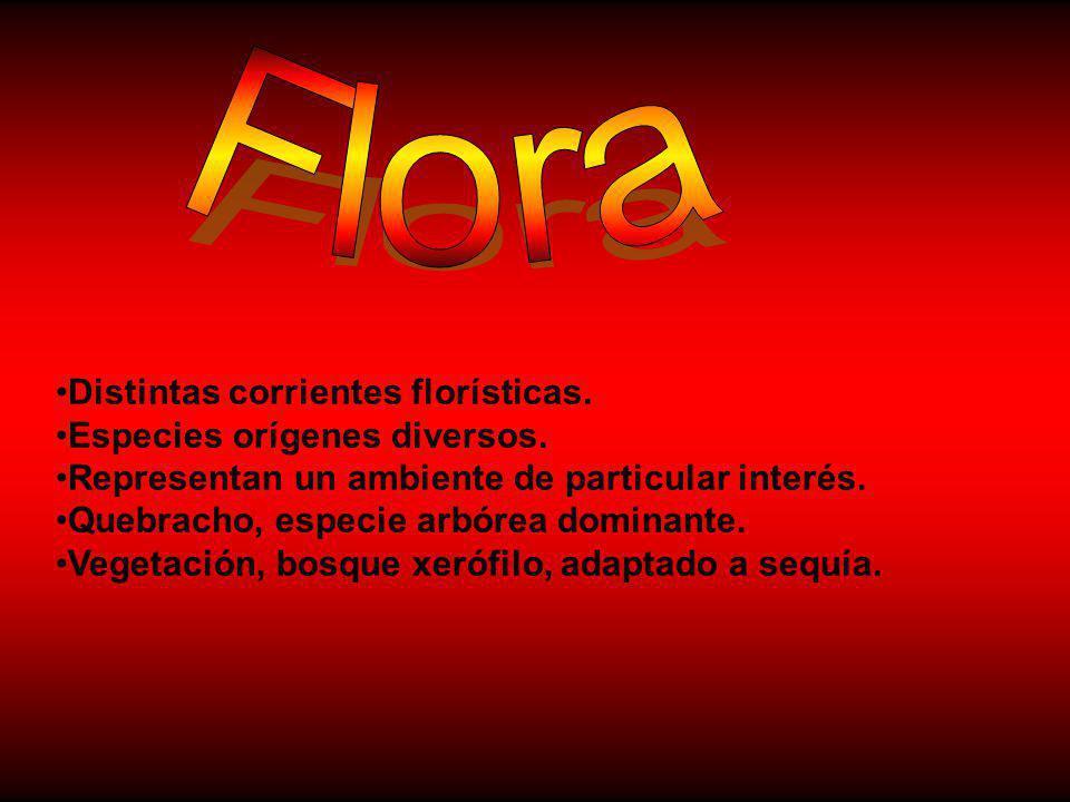 Flora Distintas corrientes florísticas. Especies orígenes diversos.