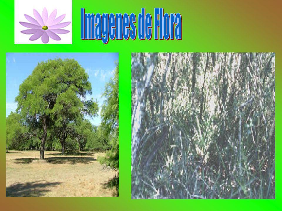 Imagenes de Flora