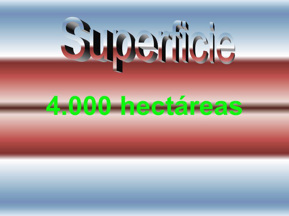 Superficie 4.000 hectáreas
