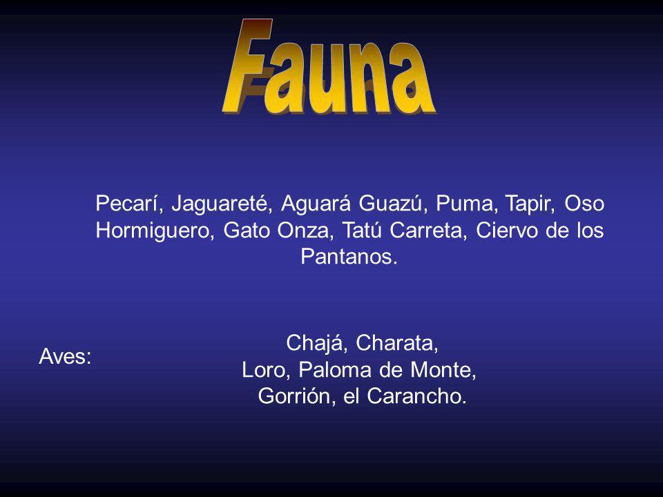 Fauna Pecarí, Jaguareté, Aguará Guazú, Puma, Tapir, Oso Hormiguero, Gato Onza, Tatú Carreta, Ciervo de los Pantanos.