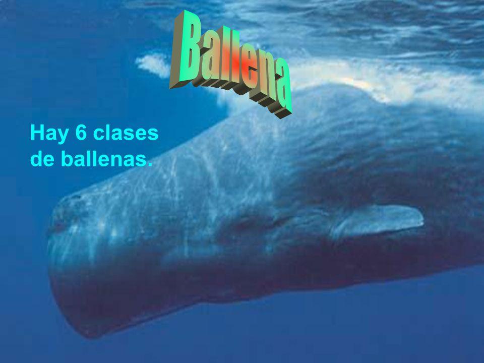 Ballena Hay 6 clases de ballenas.