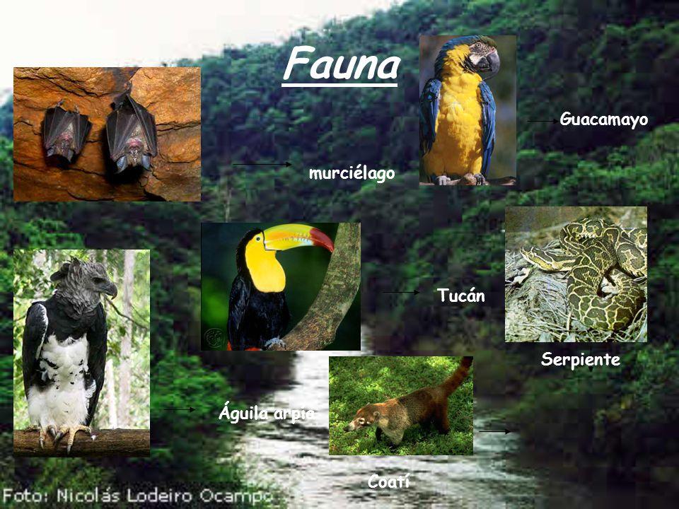 Fauna Guacamayo murciélago Tucán Serpiente Águila arpía Coatí