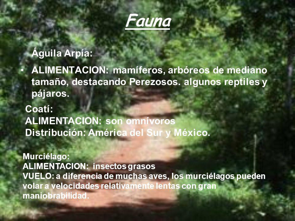 Fauna Águila Arpía: ALIMENTACION: mamíferos, arbóreos de mediano tamaño, destacando Perezosos. algunos reptiles y pájaros.