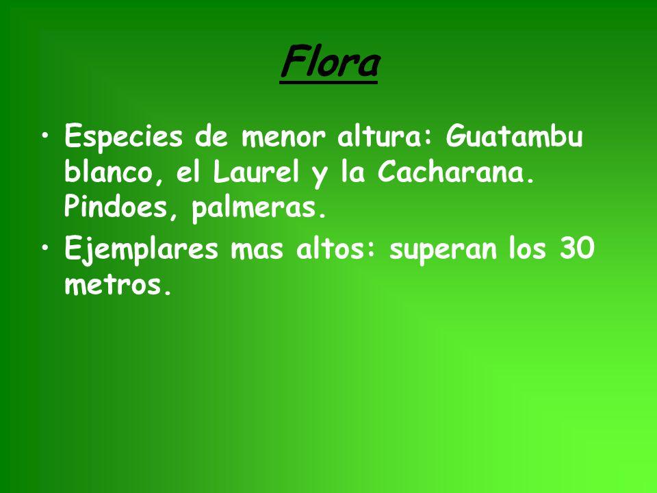 Flora Especies de menor altura: Guatambu blanco, el Laurel y la Cacharana.