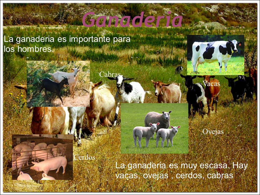 Ganaderia La ganaderia es importante para los hombres.