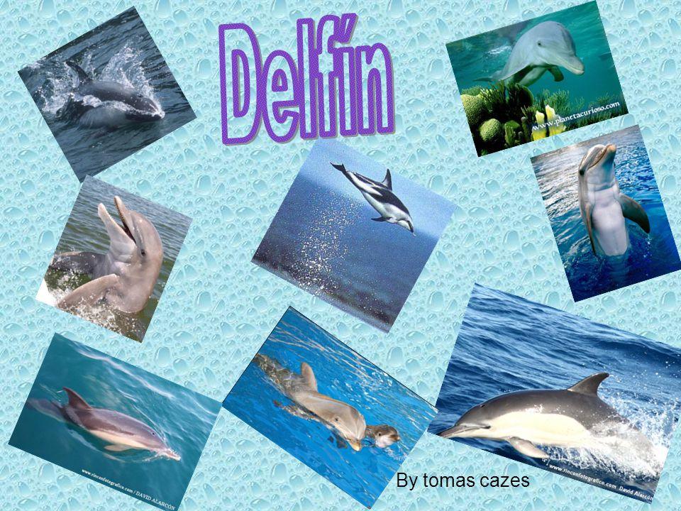 Delfín By tomas cazes