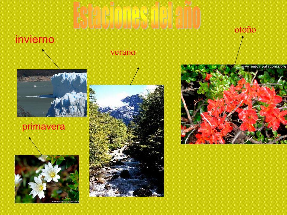 Estaciones del año otoño invierno verano primavera