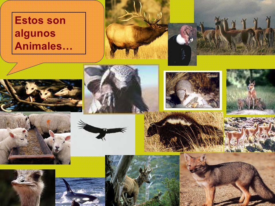 Estos son algunos Animales…