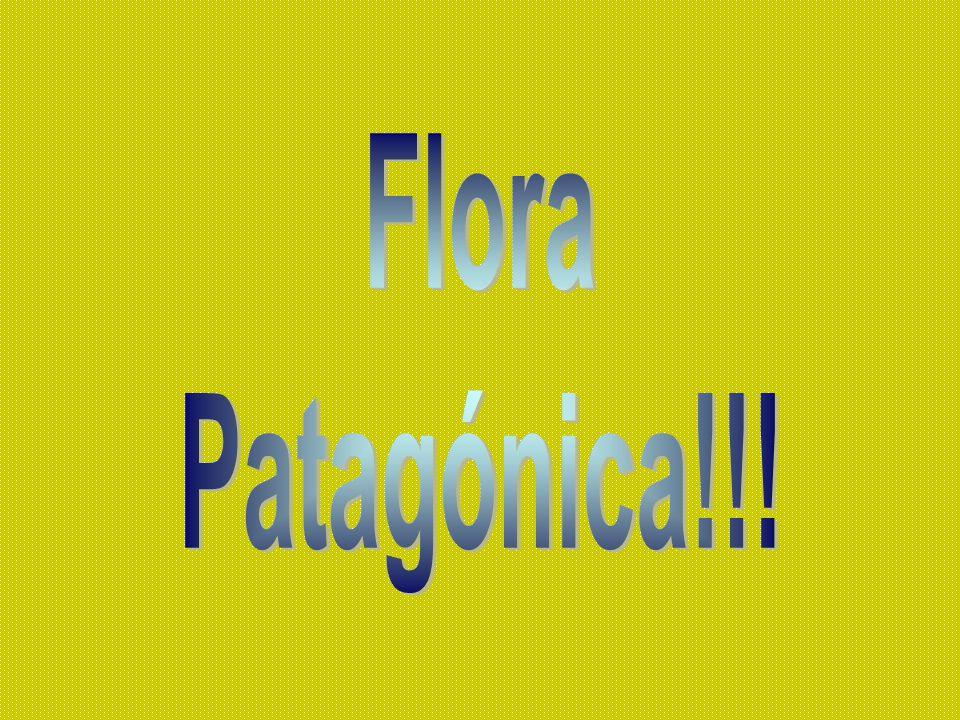 Flora Patagónica!!!