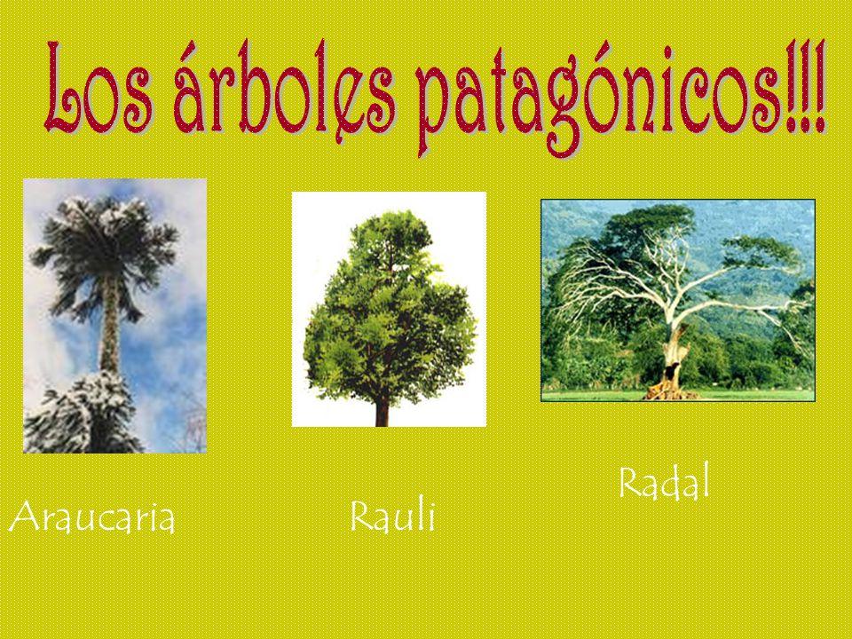 Los árboles patagónicos!!!