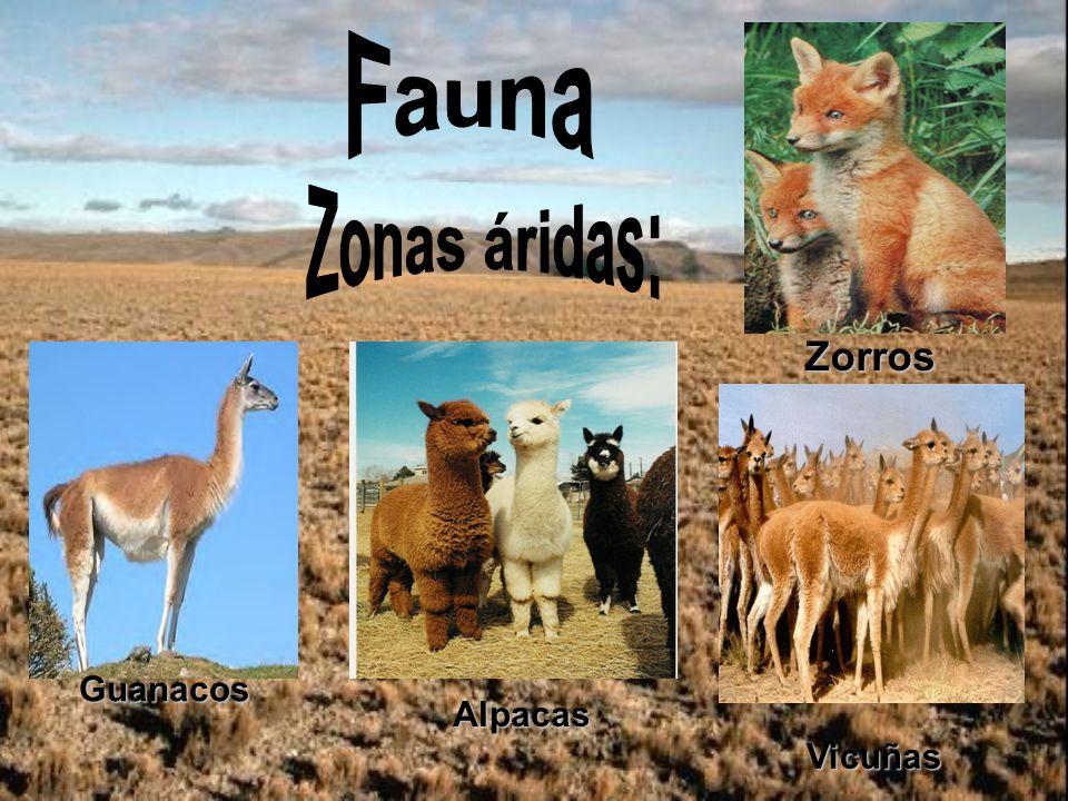 Fauna Zonas áridas: Zorros Guanacos Alpacas Vicuñas