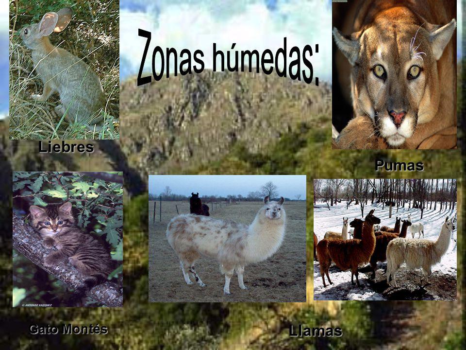 Zonas húmedas: Liebres Pumas Gato Montés Llamas