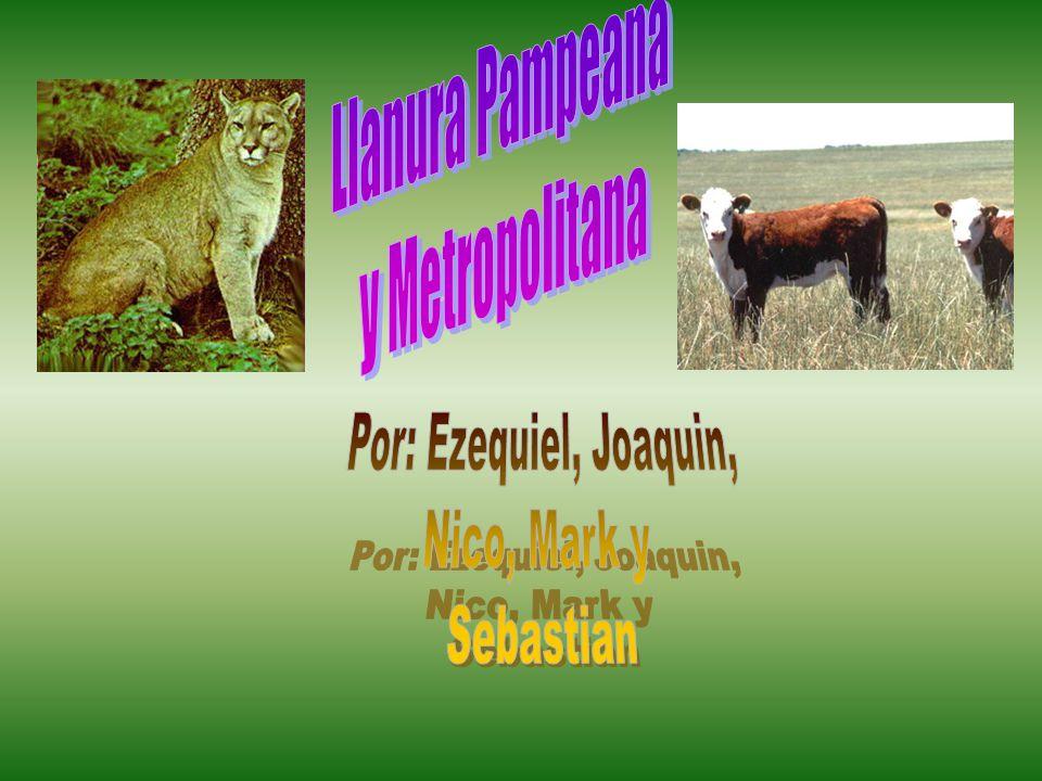 Llanura Pampeana y Metropolitana Por: Ezequiel, Joaquin, Nico, Mark y Sebastian