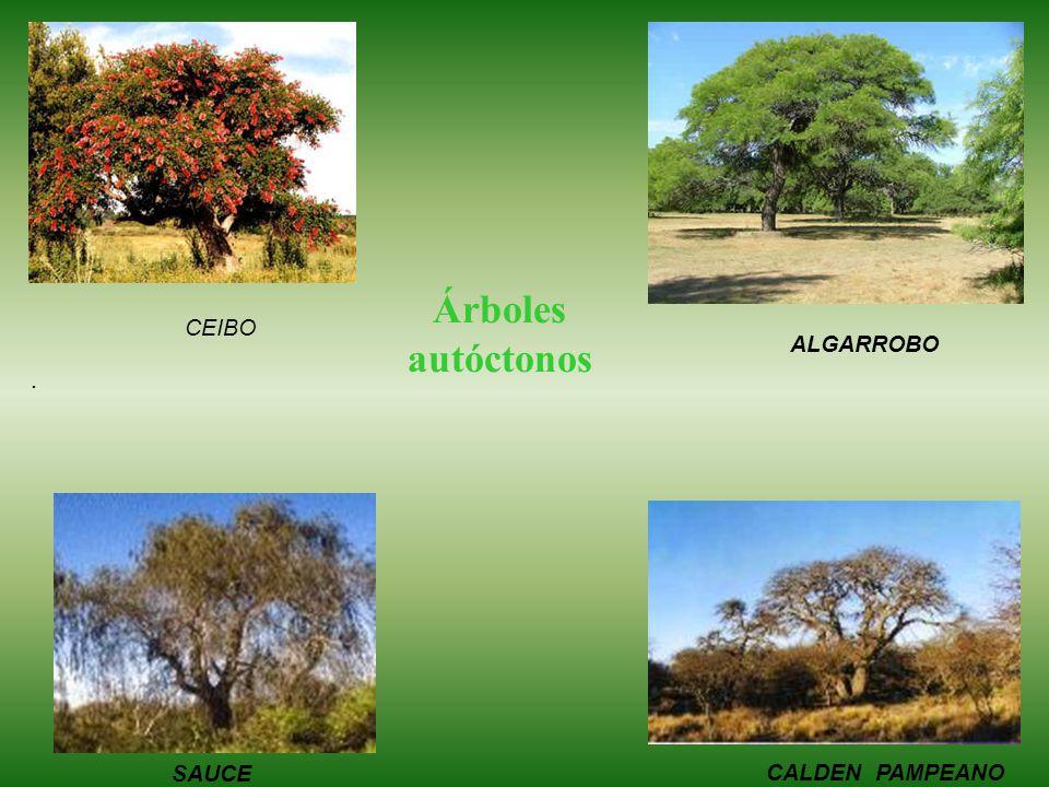 Árboles autóctonos CEIBO ALGARROBO . Sauce SAUCE CALDEN PAMPEANO