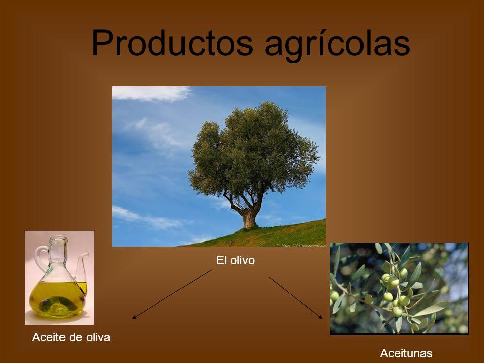 Productos agrícolas El olivo Aceite de oliva Aceitunas