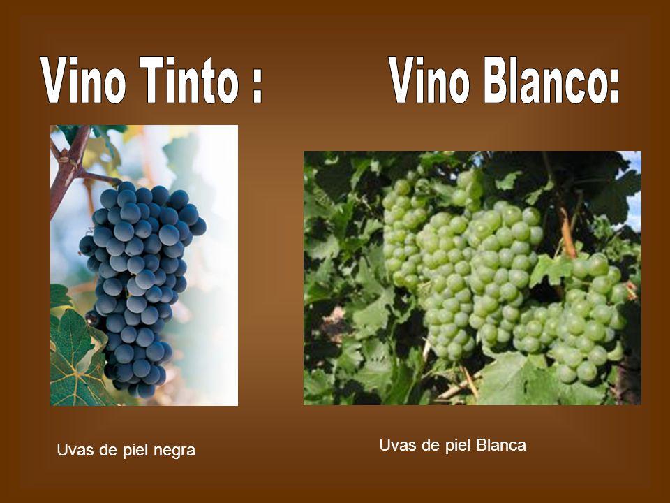 Vino Tinto : Vino Blanco: Uvas de piel Blanca Uvas de piel negra