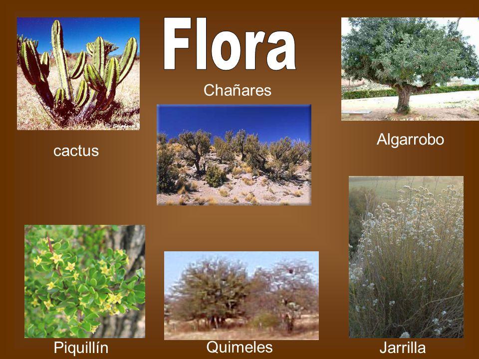 Flora Chañares Algarrobo cactus Piquillín Quimeles Jarrilla