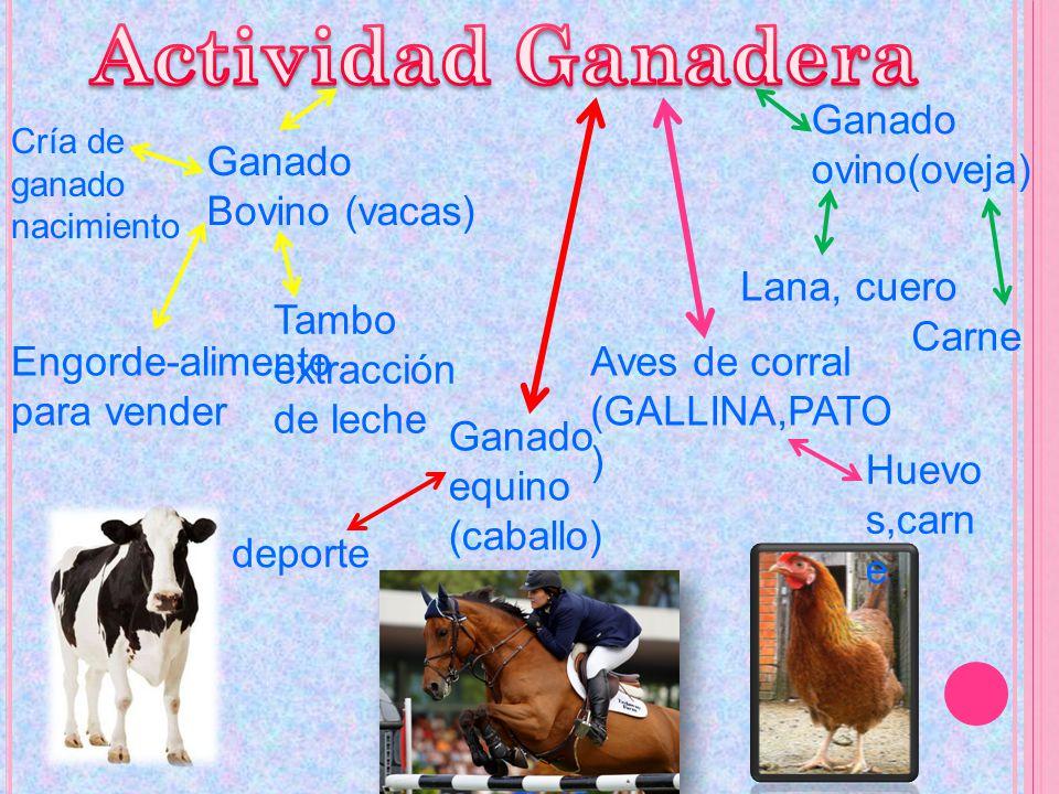 Actividad Ganadera Ganado ovino(oveja) Ganado Bovino (vacas)