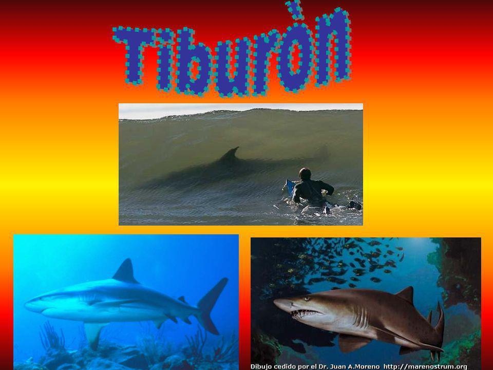 Tiburòn