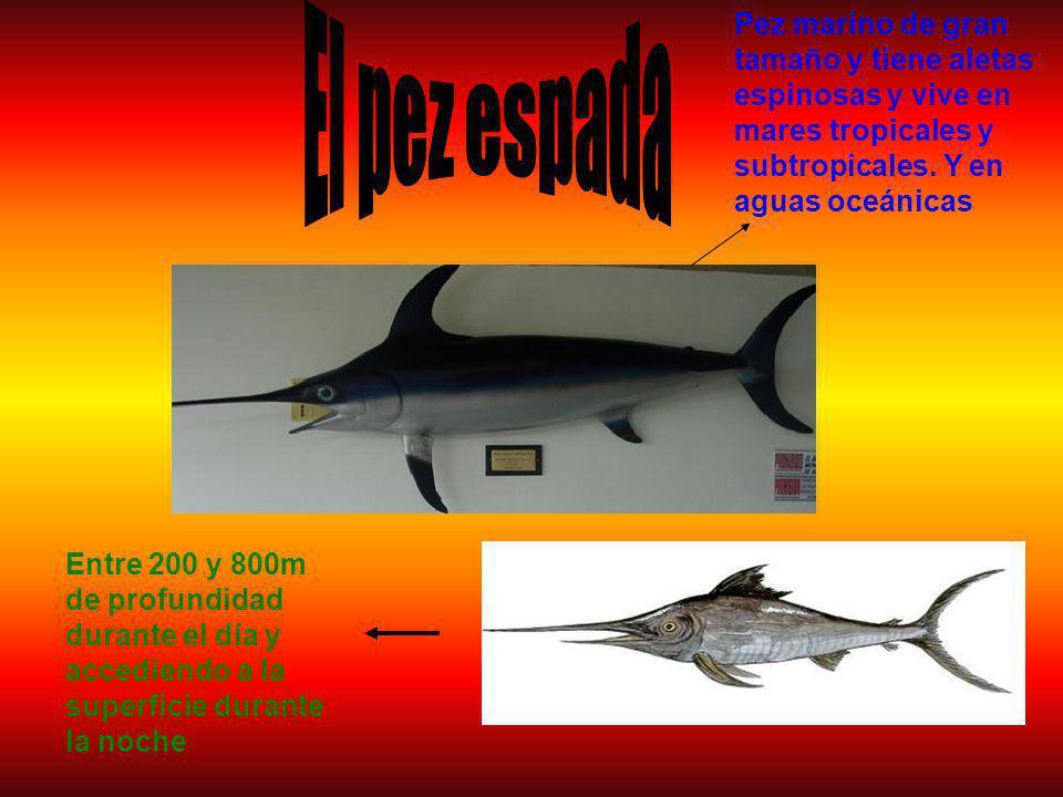 El pez espada Pez marino de gran tamaño y tiene aletas espinosas y vive en mares tropicales y subtropicales. Y en aguas oceánicas.