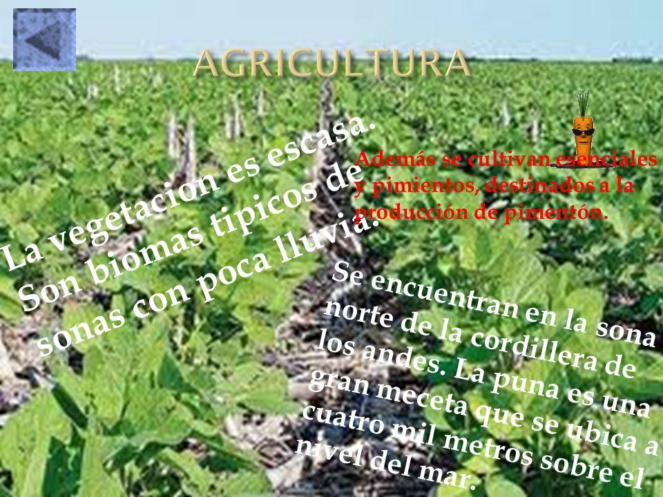 AGRICULTURA Además se cultivan esenciales y pimientos, destinados a la producción de pimentón.