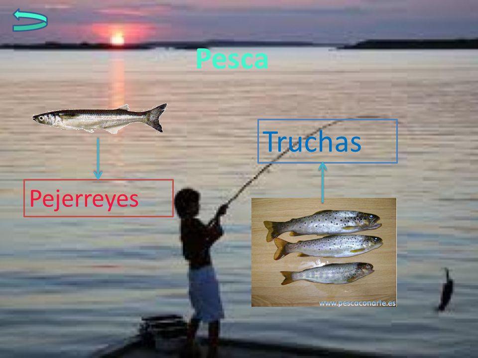 Pesca Truchas Pejerreyes
