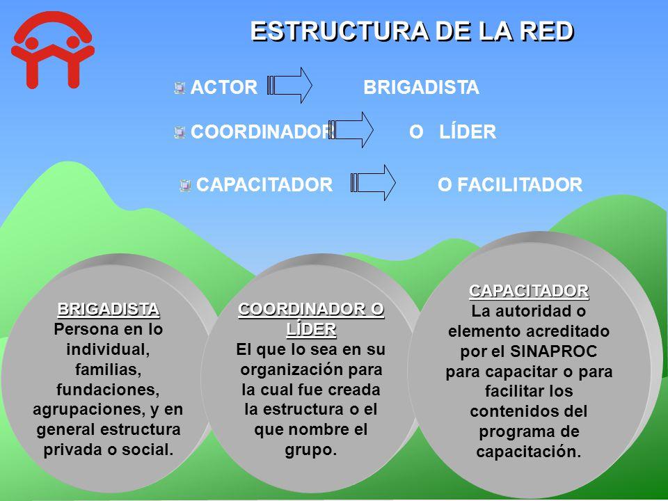 ESTRUCTURA DE LA RED ACTOR BRIGADISTA BRIGADISTA