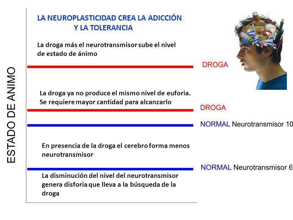 LA NEUROPLASTICIDAD CREA LA ADICCIÓN Y LA TOLERANCIA