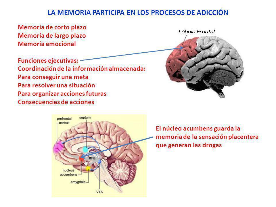 LA MEMORIA PARTICIPA EN LOS PROCESOS DE ADICCIÓN
