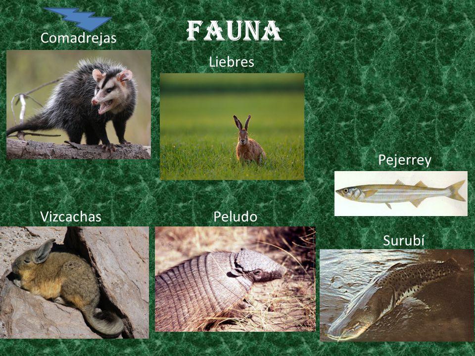 Fauna Comadrejas Liebres Pejerrey Vizcachas Peludo Surubí