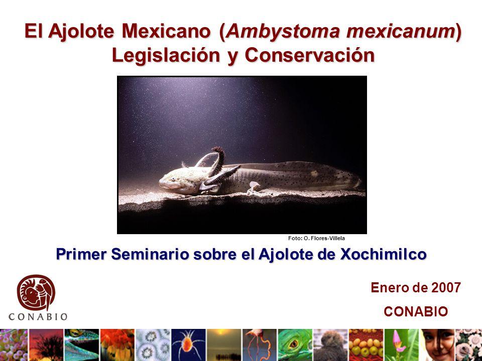 El Ajolote Mexicano (Ambystoma mexicanum) Legislación y Conservación