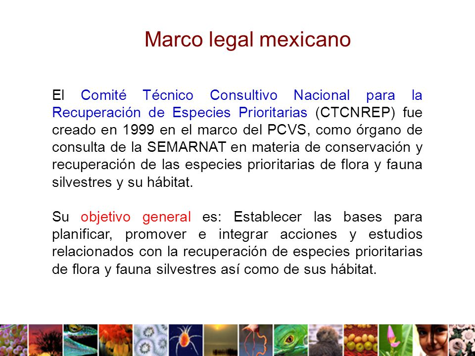Marco legal mexicano