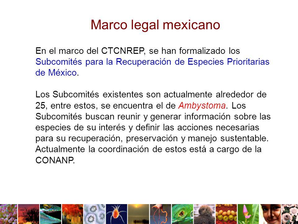 Marco legal mexicano En el marco del CTCNREP, se han formalizado los Subcomités para la Recuperación de Especies Prioritarias de México.