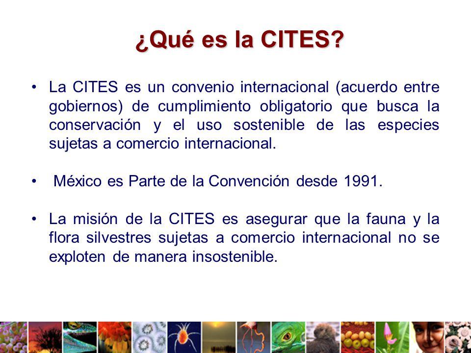 ¿Qué es la CITES