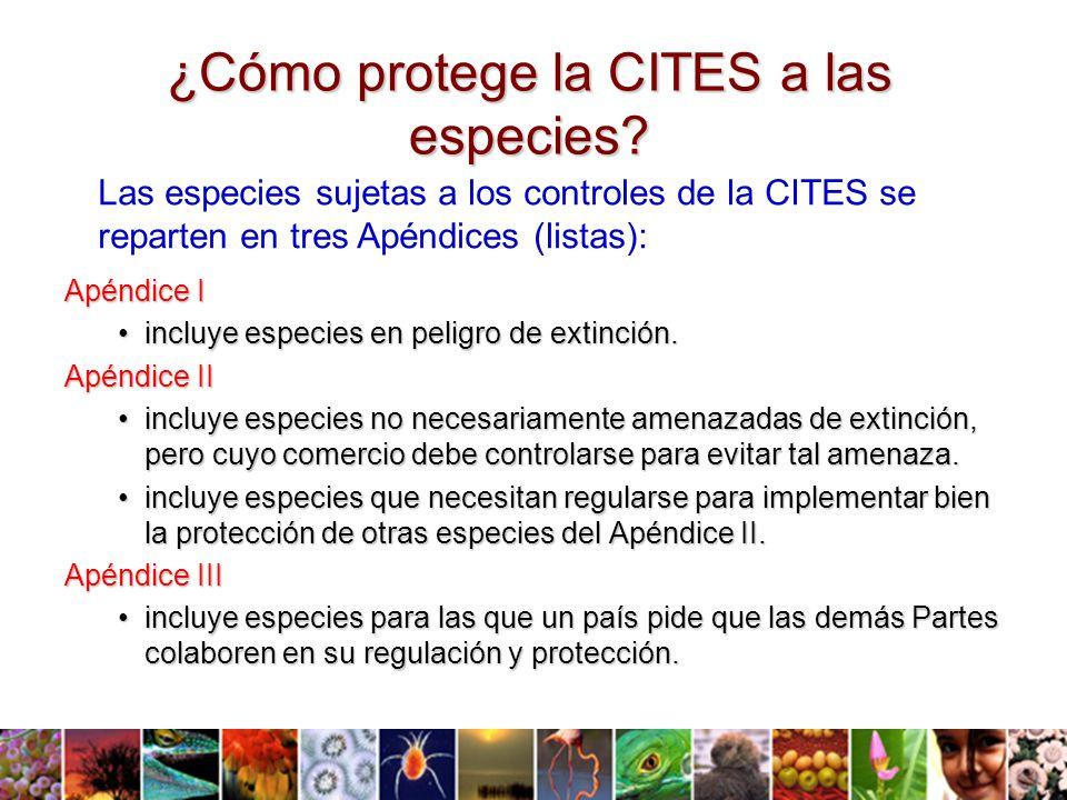 ¿Cómo protege la CITES a las especies