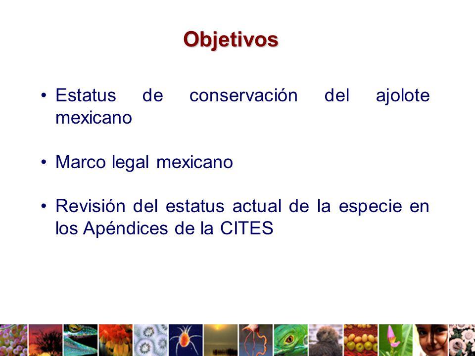 Objetivos Estatus de conservación del ajolote mexicano