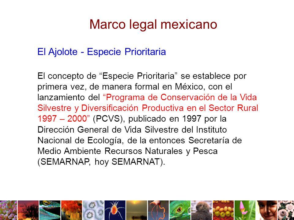 Marco legal mexicano El Ajolote - Especie Prioritaria